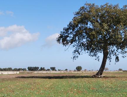 Agricoltura e terreni